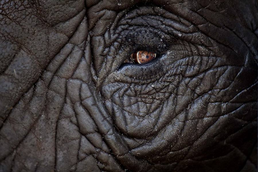 Национальный центр слонов во Флориде (9 фото)
