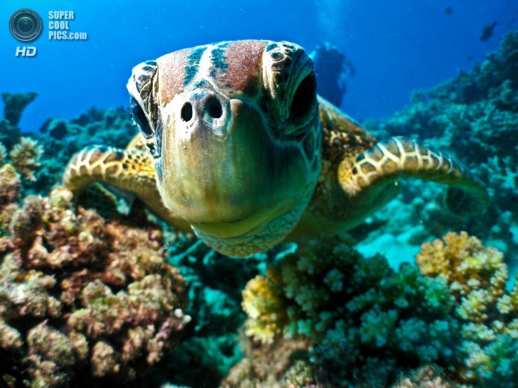 Большой Барьерный риф. (fugm10)