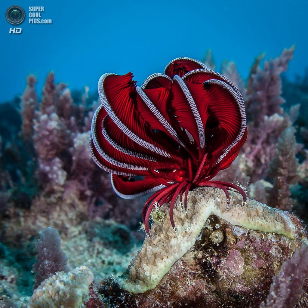 Большой Барьерный риф. (Robert Rath)