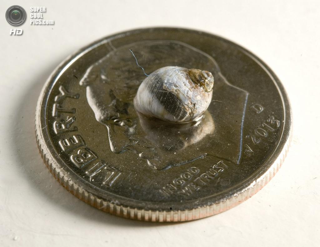 США. Алисо-Вьехо, Калифорния. 18 августа. Турбо на 10-центовой монетке для сравнения. (AP Photo/Jebb Harris, The Orange County Register)