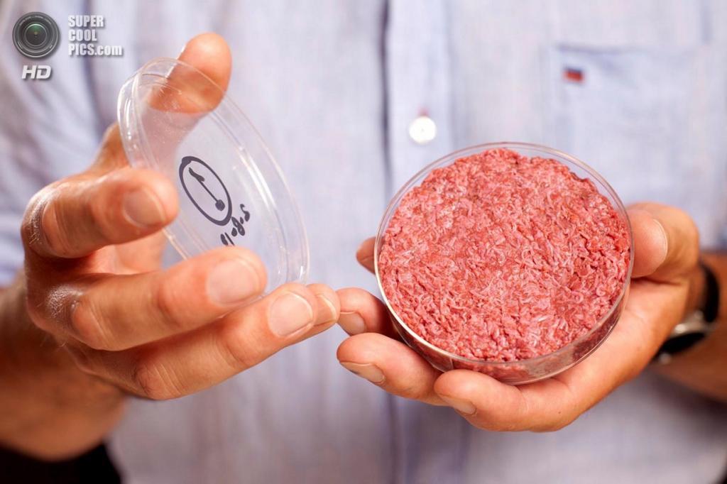 Великобритания. Лондон. 5 августа. Презентация искусственно выращенной говядины. (David Parry via AFP/Getty Images)
