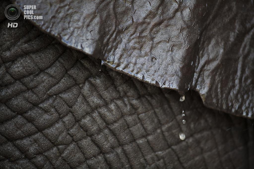 США. Феллсмер, Флорида. 2 августа. Танди принимает душ. (Laura McDermott/The Palm Beach Post)