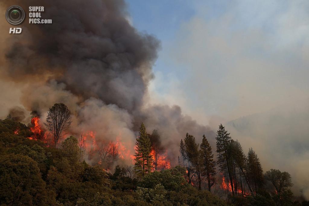 США. Гровленд, Калифорния. 21 августа. Лесной пожар «Rim Fire» пожирает деревья вдоль шоссе 120. (Justin Sullivan/Getty Images)
