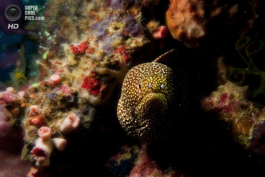 Большой Барьерный риф. (Victor Sim)