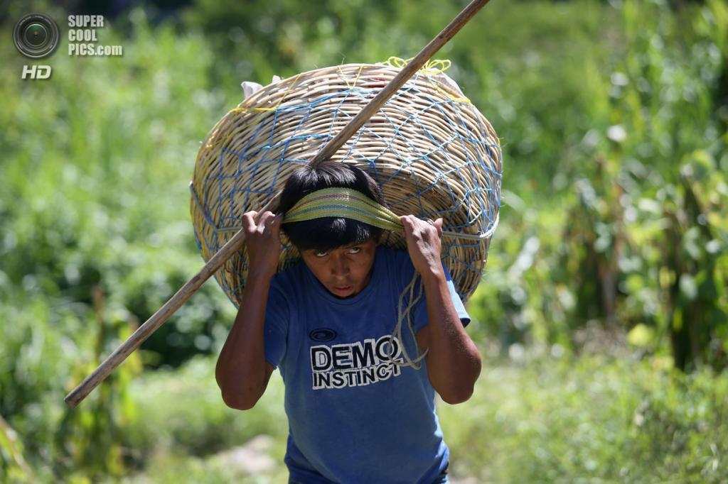 Мексика. Талисман, Чьяпас. 1 августа. Гватемальский нелегальный торговец несёт продукты на продажу. (John Moore/Getty Images)