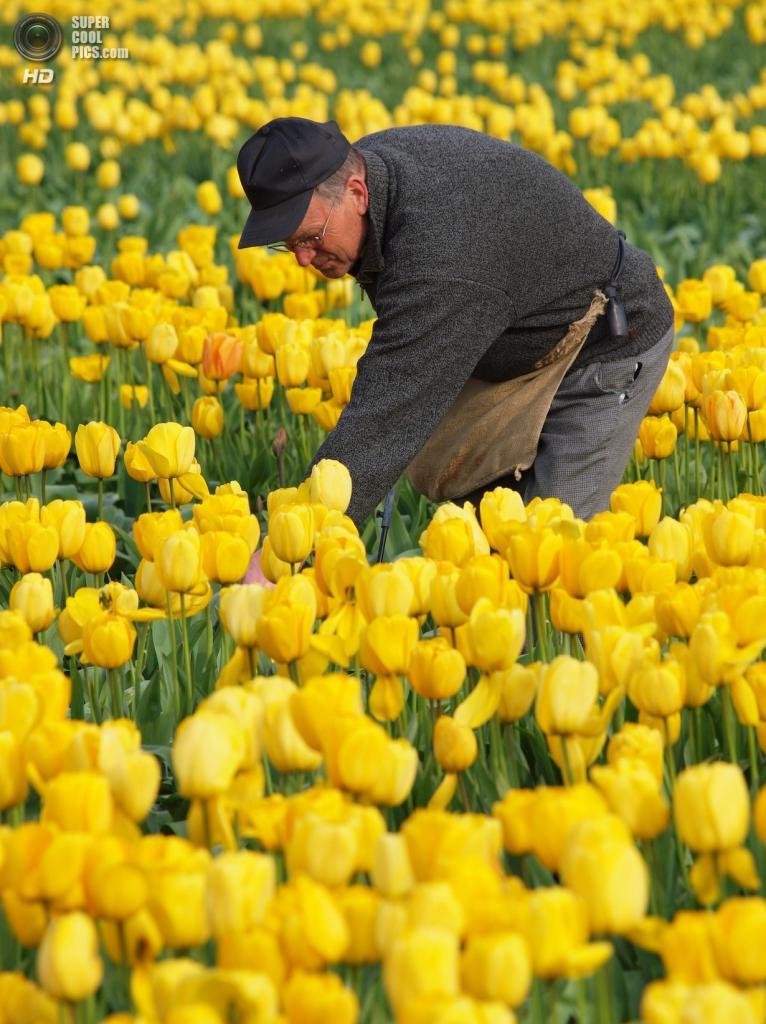 Тюльпаны. (Martin Sojka)