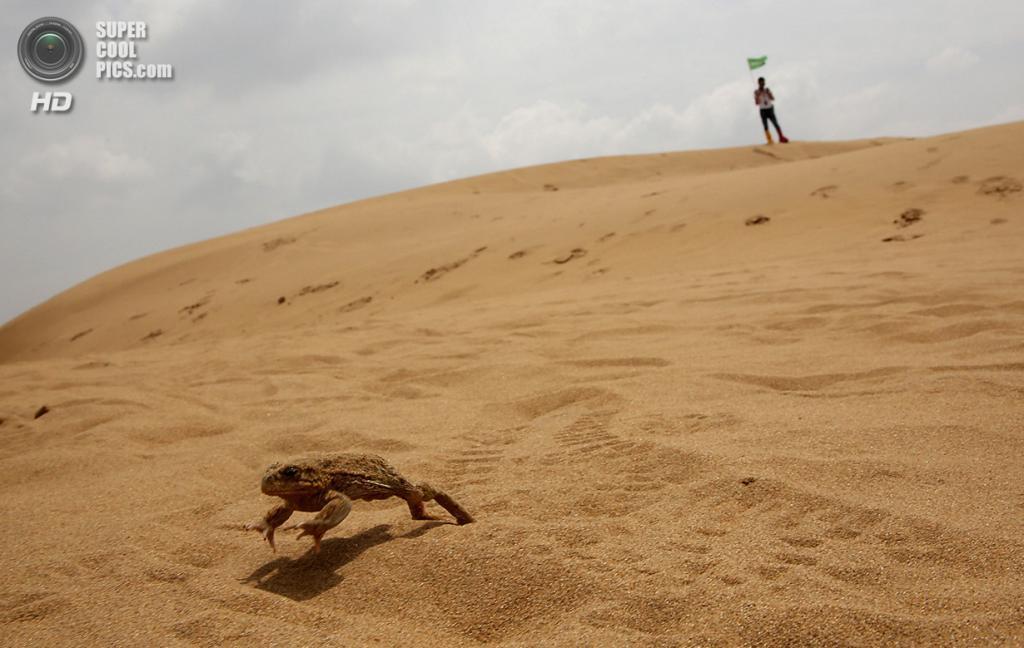 Китай. Ордос, Внутренняя Монголия. 18 июля. Незарегистрированный житель Сяншавани — жаба. (Feng Li/Getty Images)