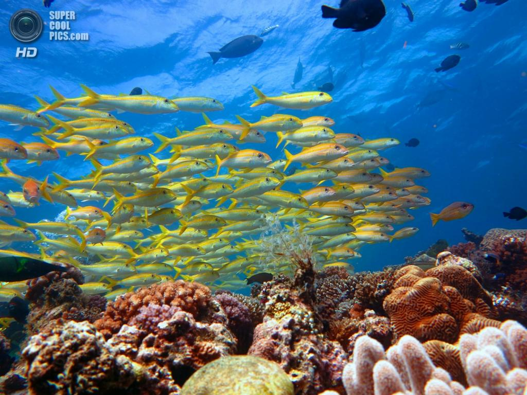 Большой Барьерный риф. (Kristoffer Larsen)