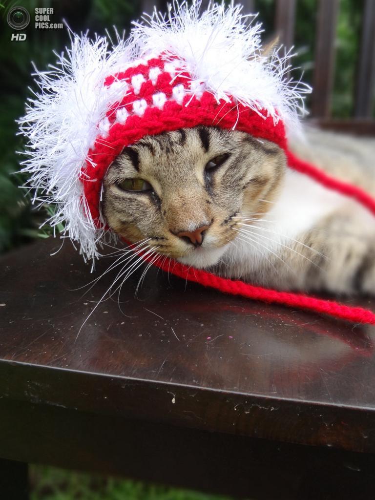 США. Флоренс, Южная Каролина. Головные уборы для котов от Мередит Ярборо. (Meredith Yarborough)