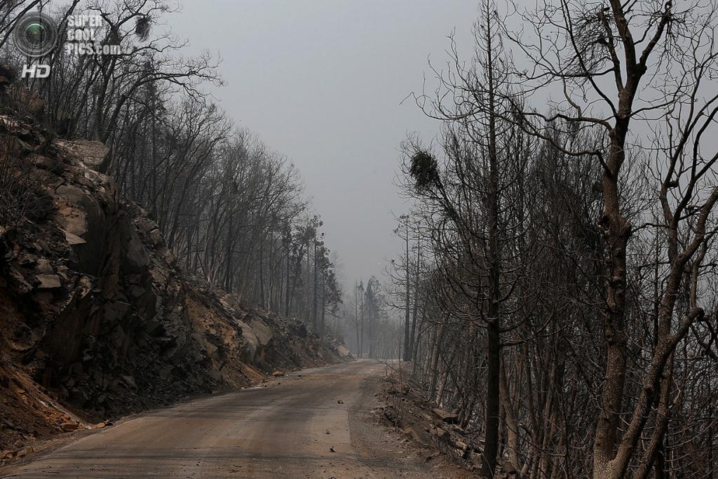 США. Гровленд, Калифорния. 23 августа. Пожарище, оставшееся после прохождения лесного пожара «Rim Fire». (Justin Sullivan/Getty Images)