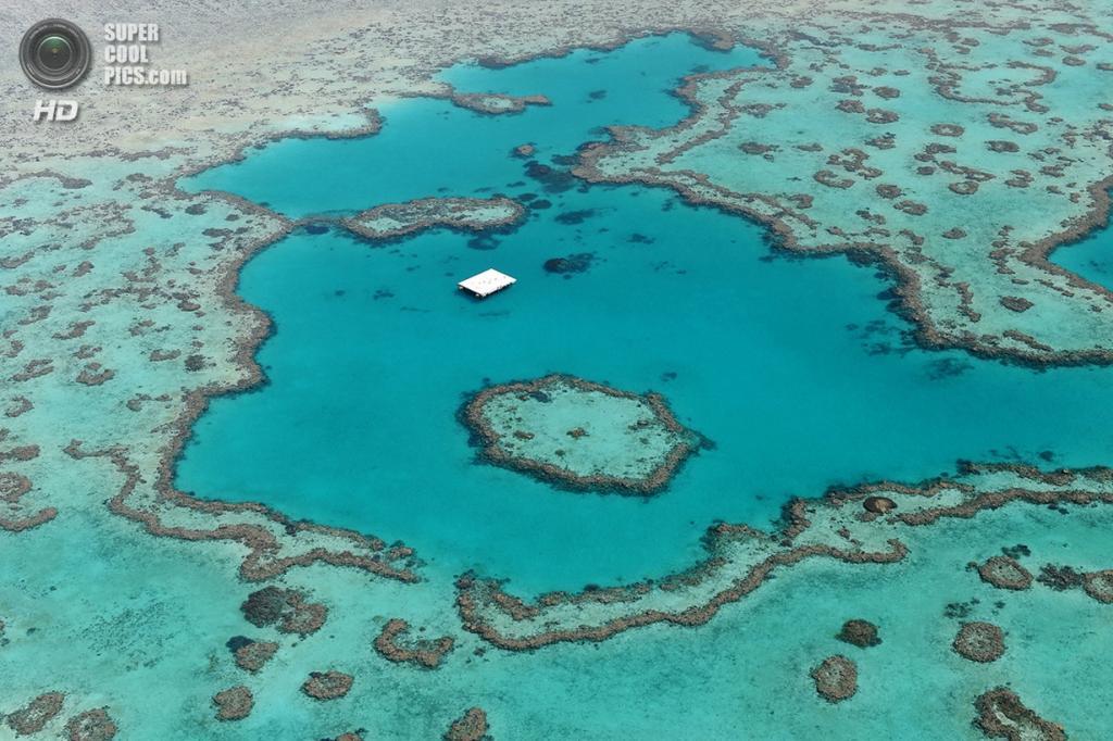 Большой Барьерный риф. (Laurent Thery)