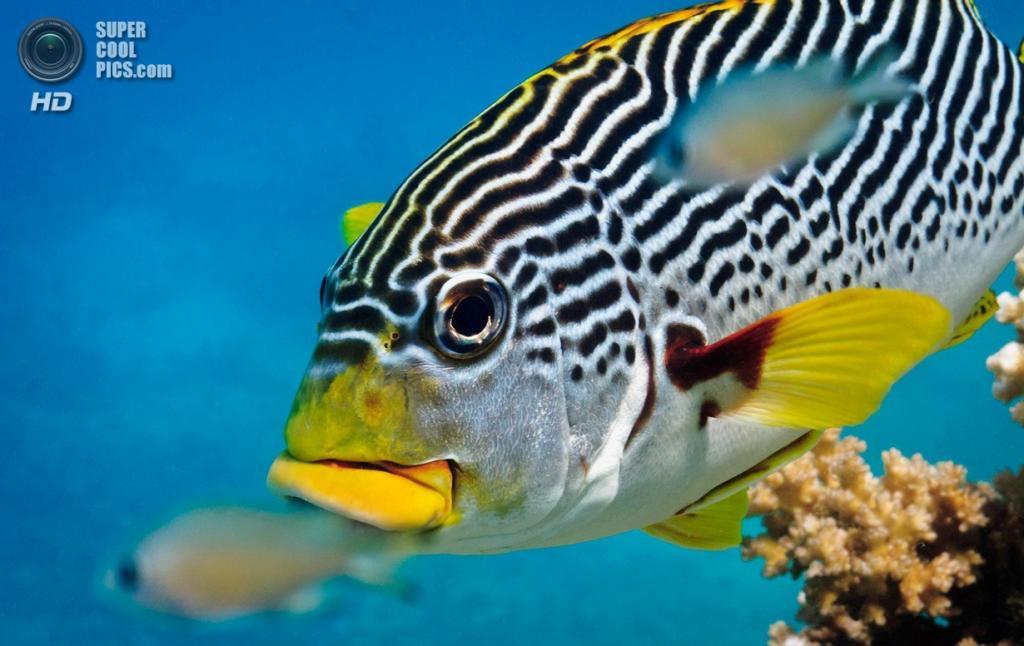 Большой Барьерный риф. (Carl Chapman)