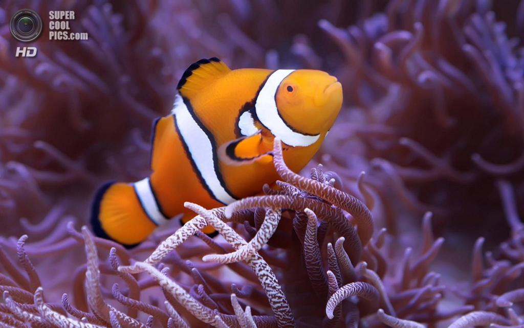 Большой Барьерный риф. (Shannon Rogers)