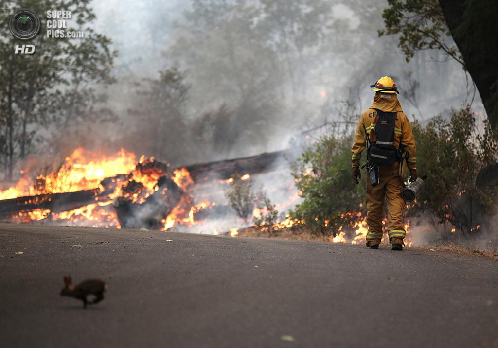 США. Гровленд, Калифорния. 21 августа. Кролик пересекает шоссе 120, убегая от лесного пожара «Rim Fire». (Justin Sullivan/Getty Images)