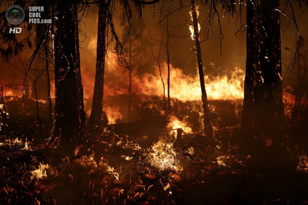 США. Гровленд, Калифорния. 25 августа. Лесной пожар «Rim Fire». (AP Photo/Jae C. Hong)