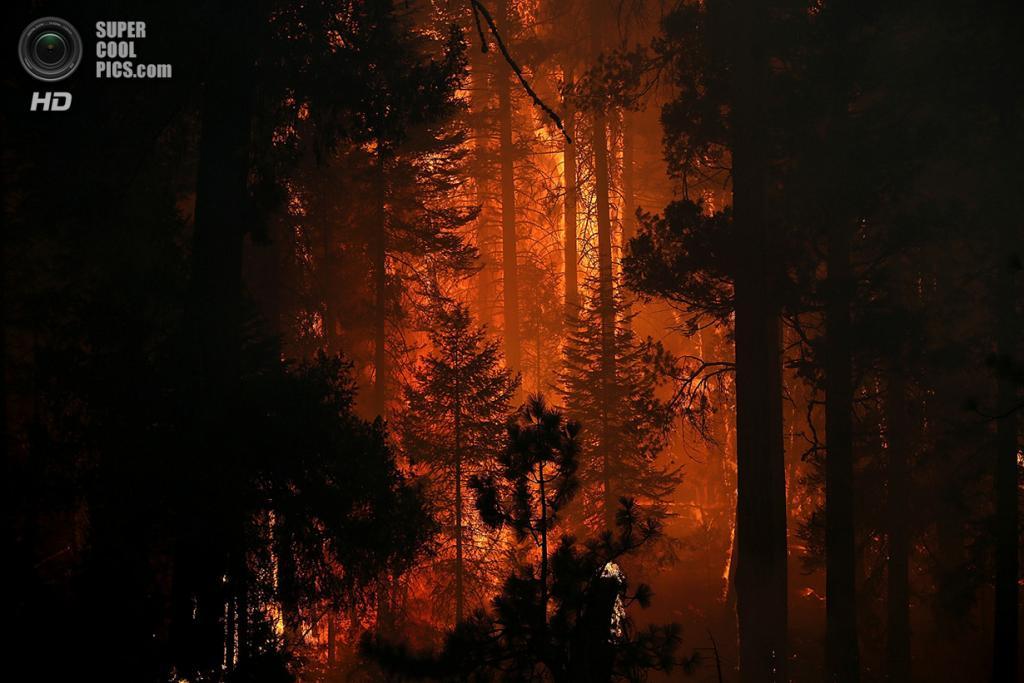 США. Гровленд, Калифорния. 24 августа. Лесной пожар «Rim Fire». (Justin Sullivan/Getty Images)