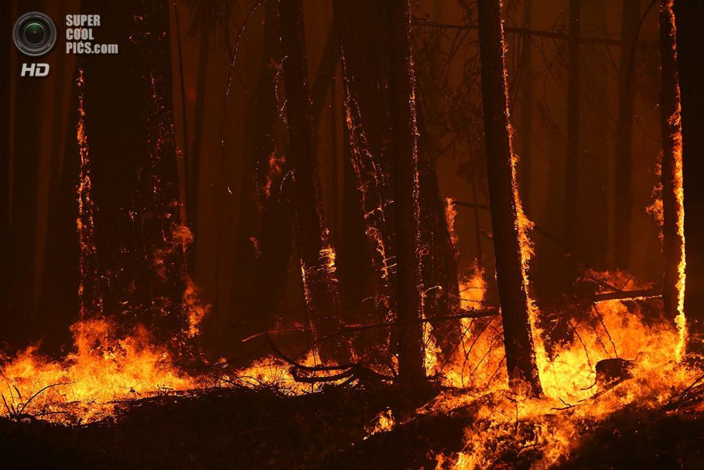 США. Гровленд, Калифорния. 25 августа. Лесной пожар «Rim Fire». (Justin Sullivan/Getty Images)