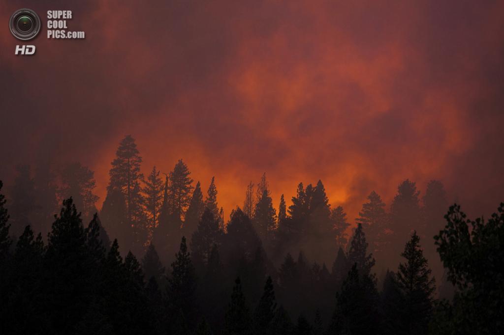 США. Бак-Медоус, Калифорния. 22 августа. Зарево, вызванное лесным пожаром «Rim Fire». (REUTERS/Max Whittaker)