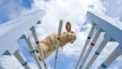 Кроличьи прыжки (5 фото)