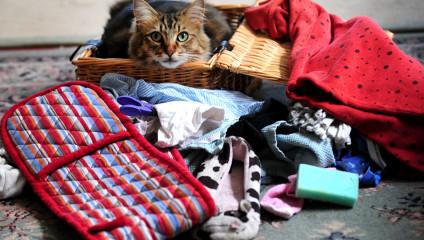 Кот-клептоман по кличке Норрис (5 фото)