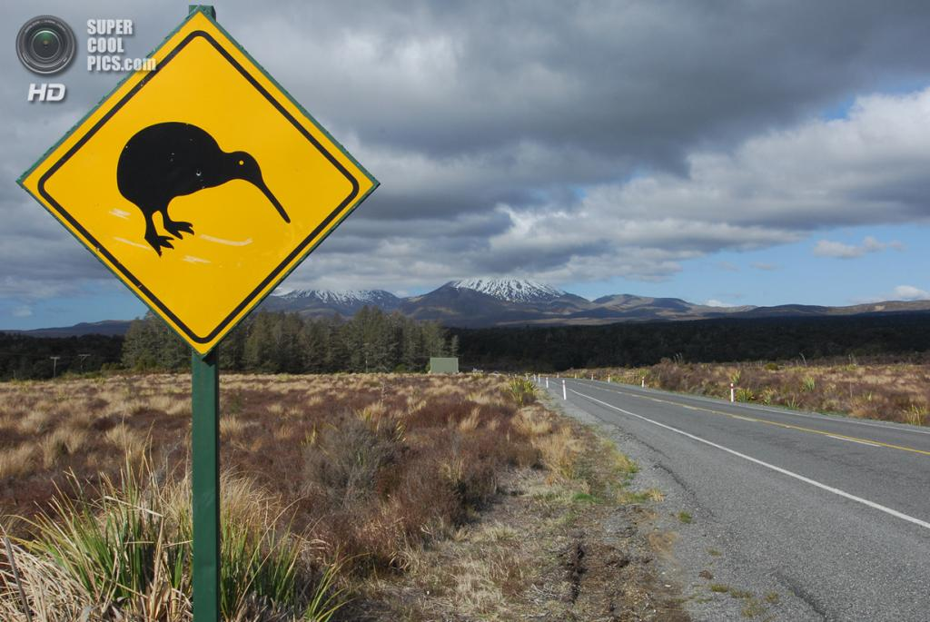 Дорожный знак, предупреждающий о возможных киви на дороге. (Rafael Zwiegincew)