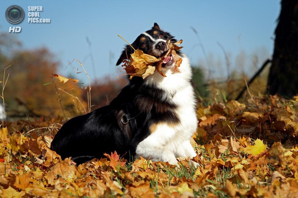 Ранняя осень. (Nicole Henseler)