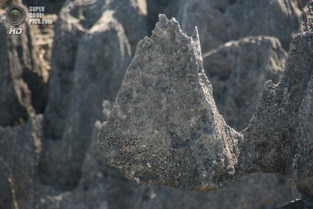 Мадагаскар. Заповедник Цинжи-дю-Бемараха. (Marco Zanferrari)
