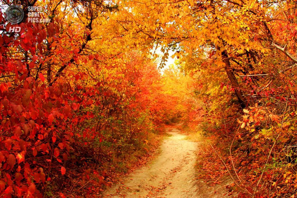 Ранняя осень. (Nataliya Kalinina)