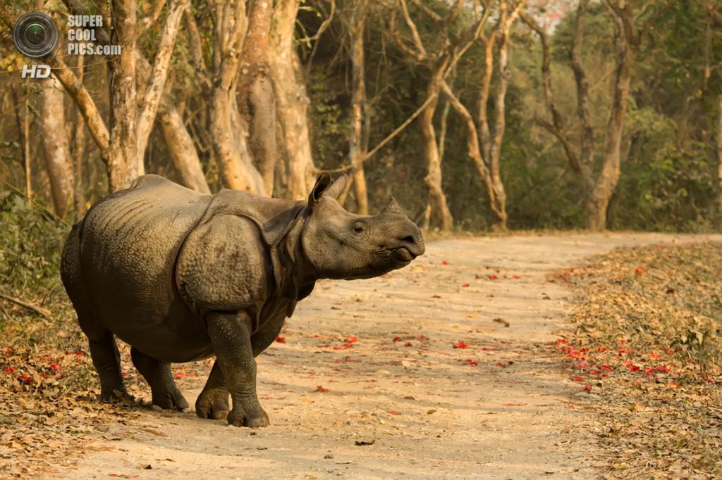 Носороговые. (Sumeet Moghe)
