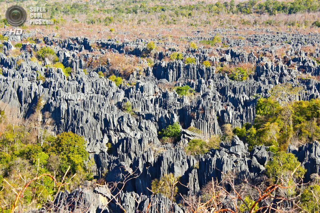 Мадагаскар. Заповедник Цинжи-дю-Бемараха. (snaggleraggle)