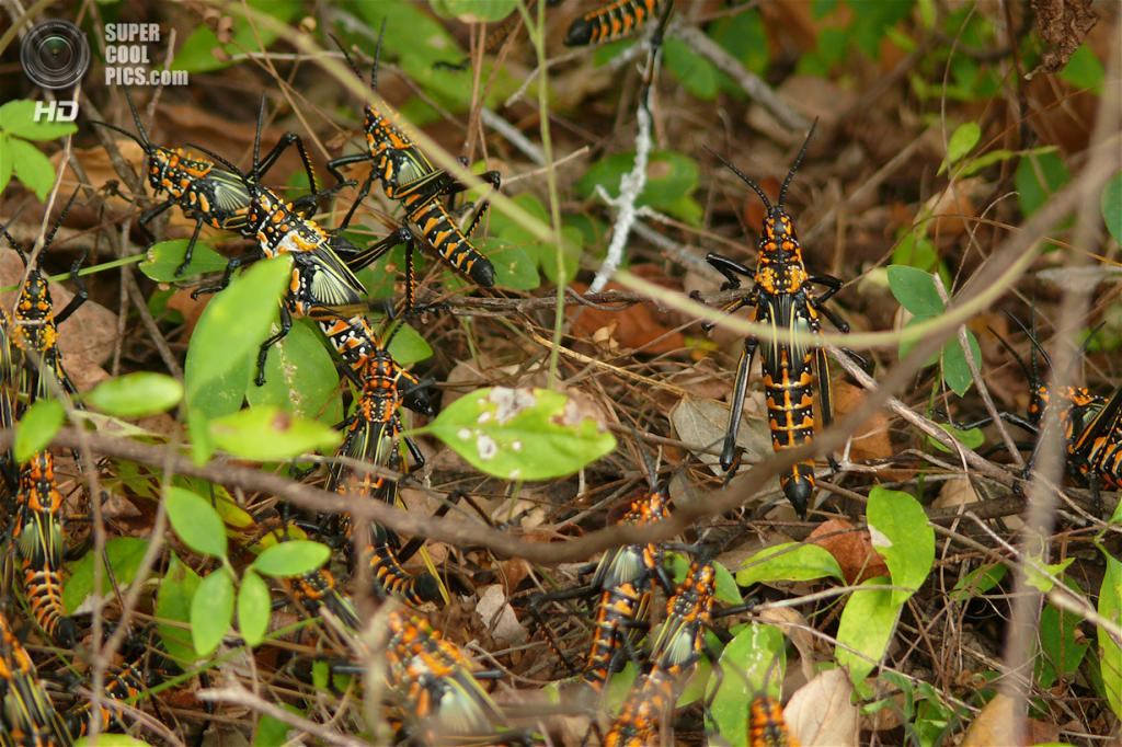 Мадагаскар. Жители заповедника Цинжи-дю-Бемараха. (Rita Willaert)