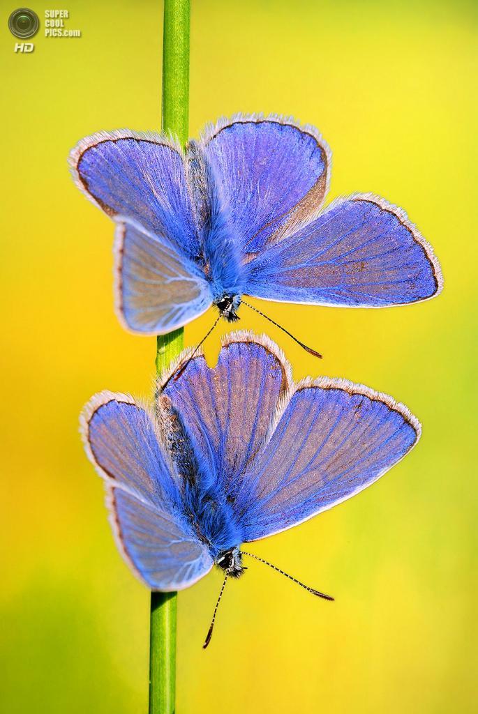 Бабочки. (Boris Godfroid)
