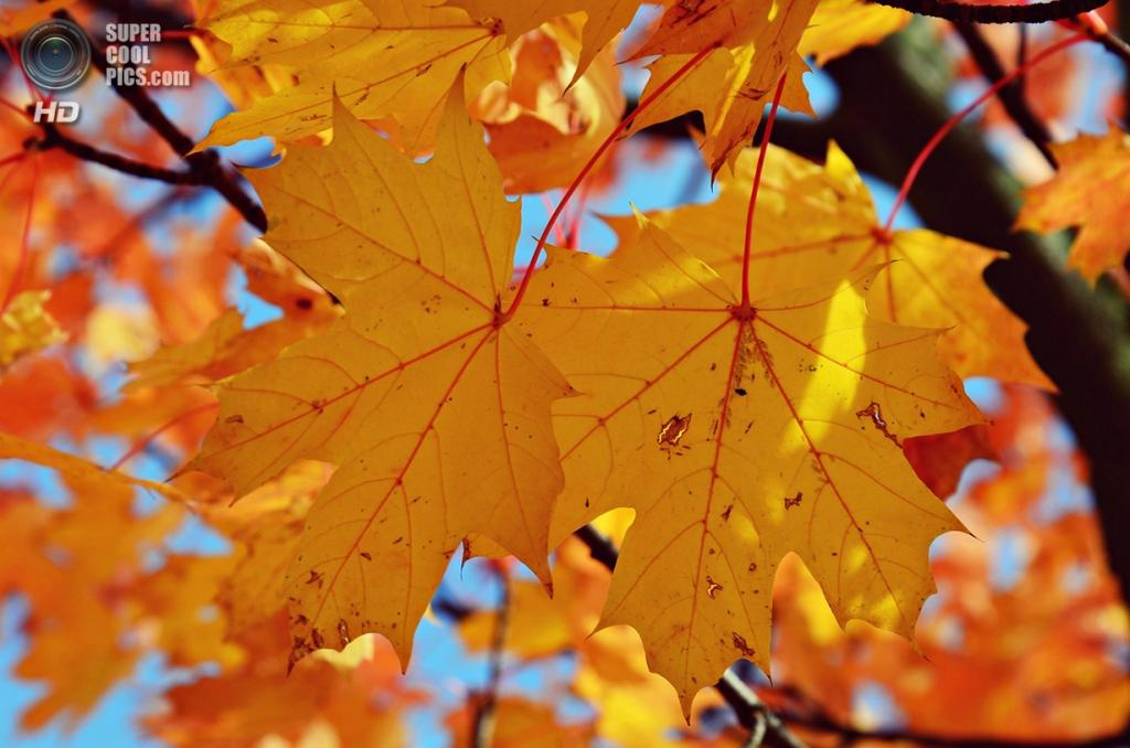 Ранняя осень. (Julia Kaufmann)