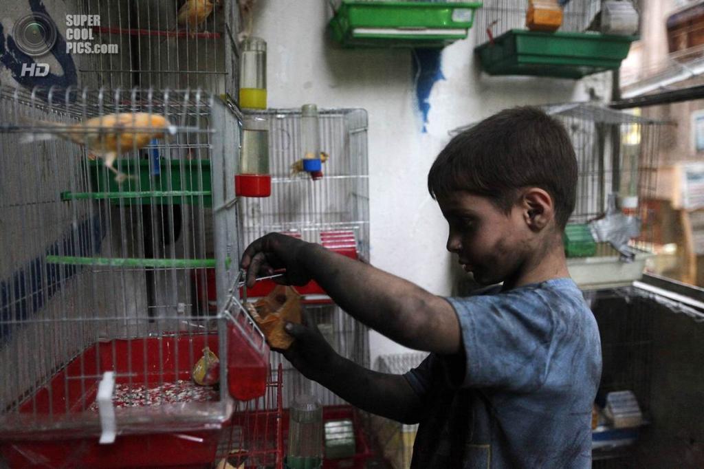 Исса кормит птиц у себя дома. (Foto Reuters / Hamid Khatib)