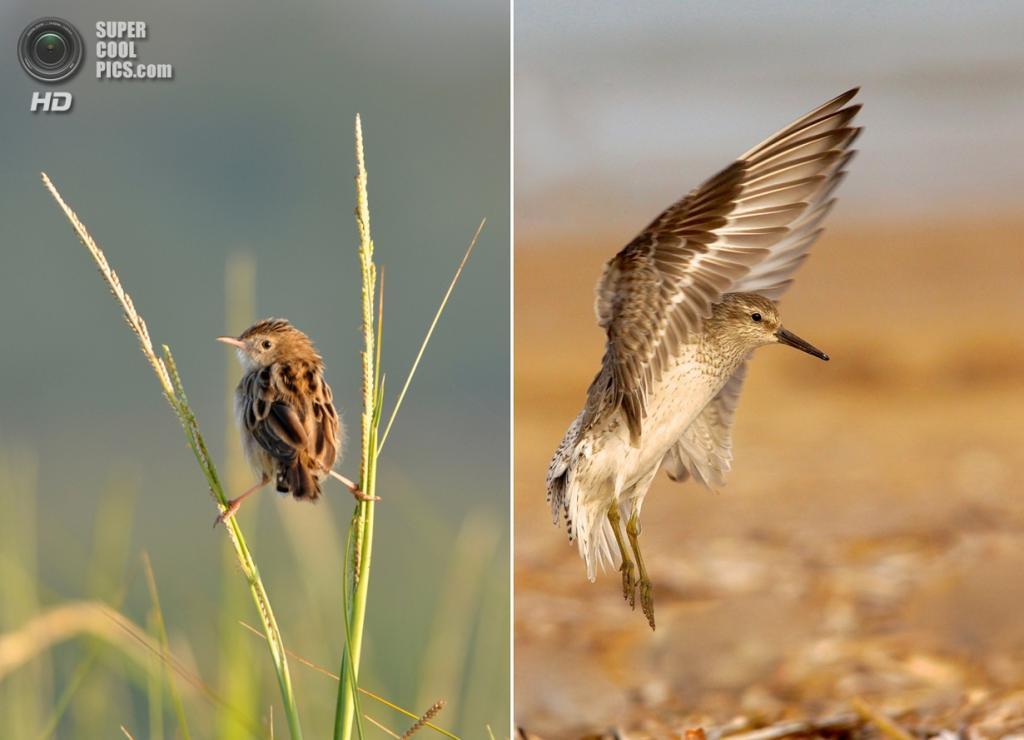 1. «Упражнения необходимы». Категория «Birds and the Bees», призёр. (Vinayak Parmer); 2. «Шасси». Категория «Birds and the Bees», победитель в юношеской номинации. (Vinayak Parmer)
