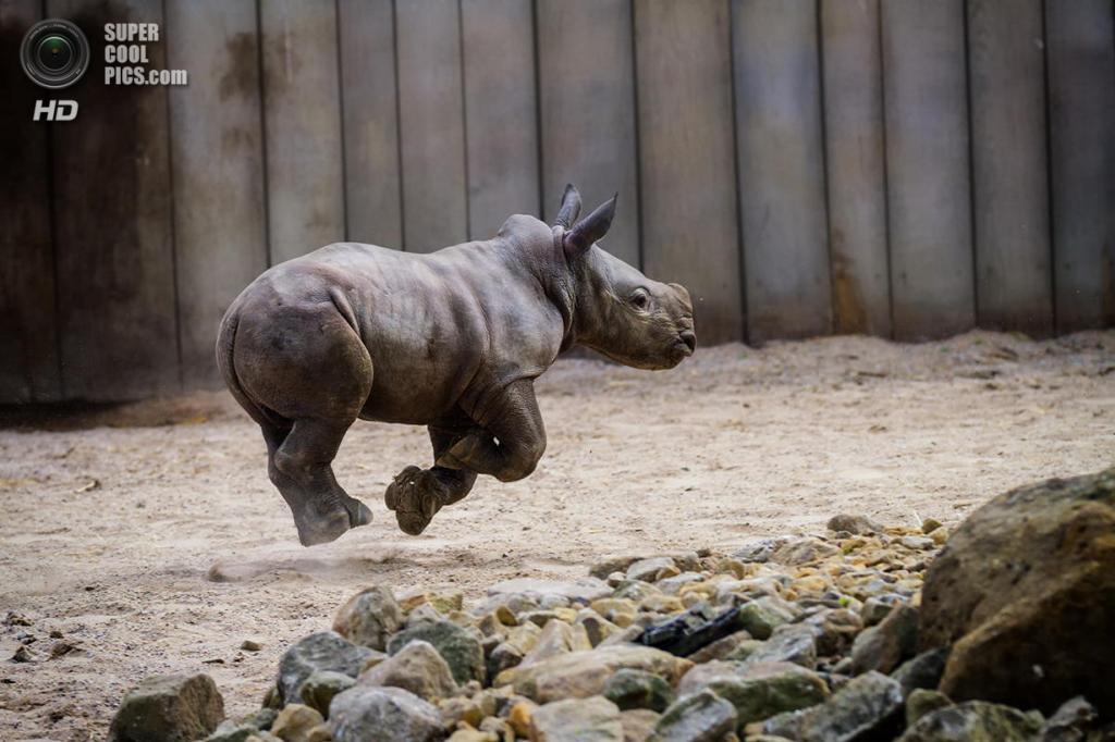Носороговые. (Martin Frehe)