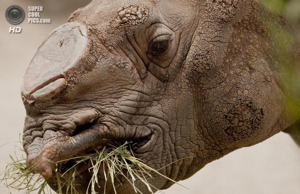 Носороговые. (Jeff Swearingen)