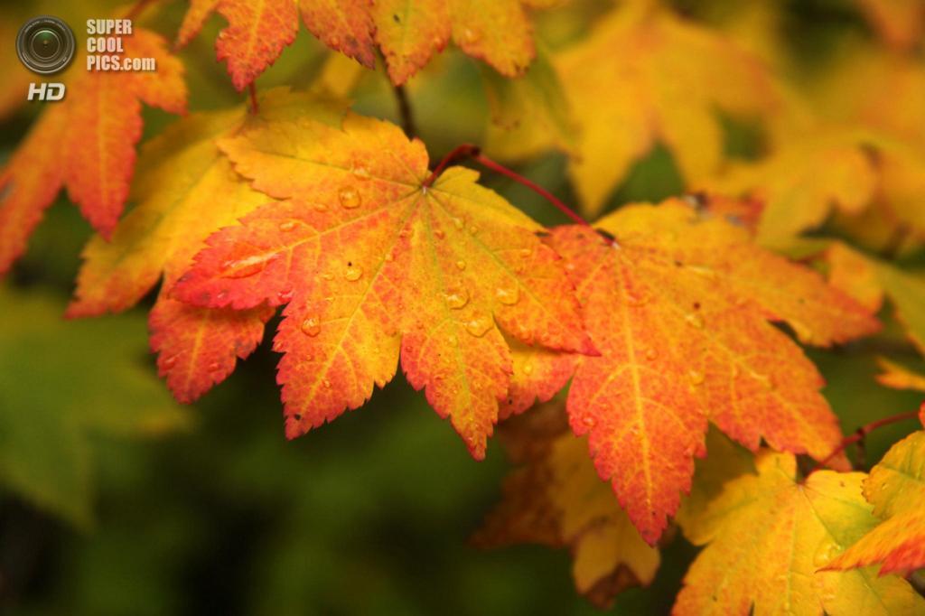 Ранняя осень. (Laura Bellamy)