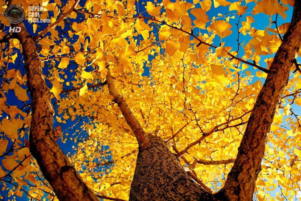 Ранняя осень. (Teruo Araya)
