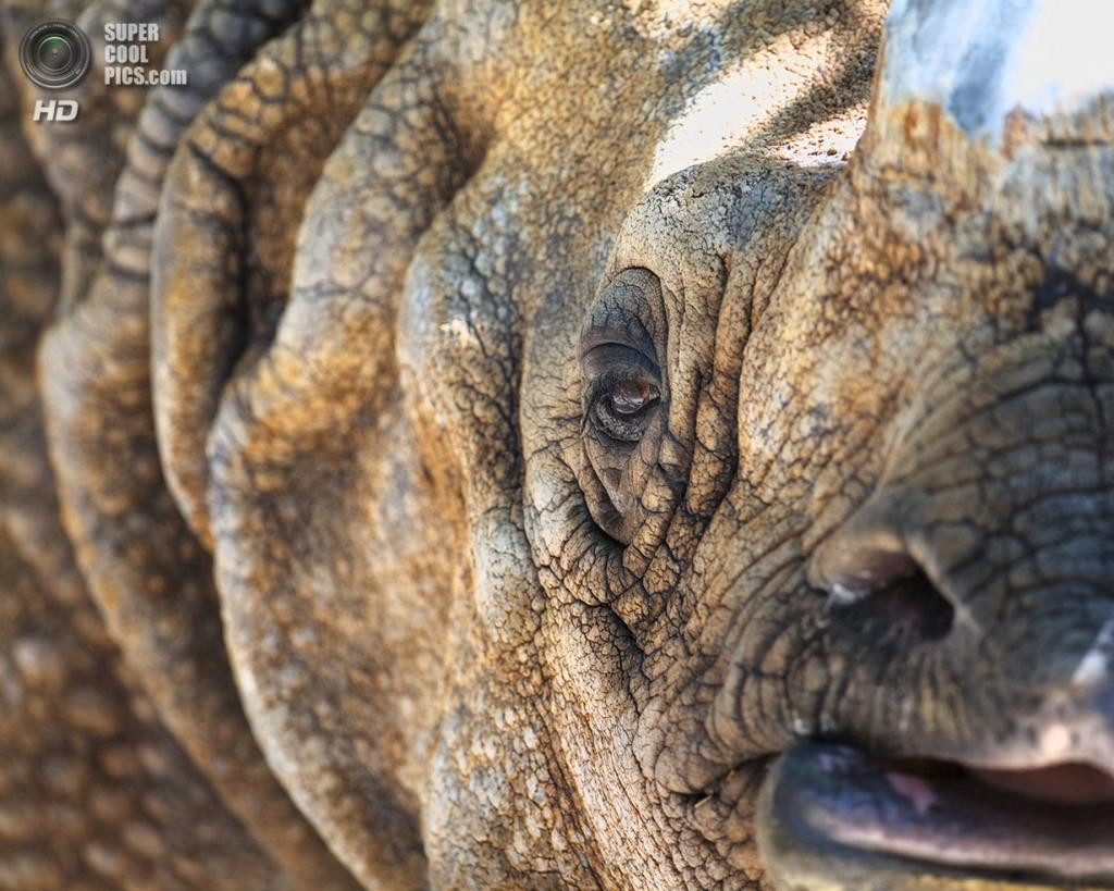Носороговые. (Jeff Vaillancourt)