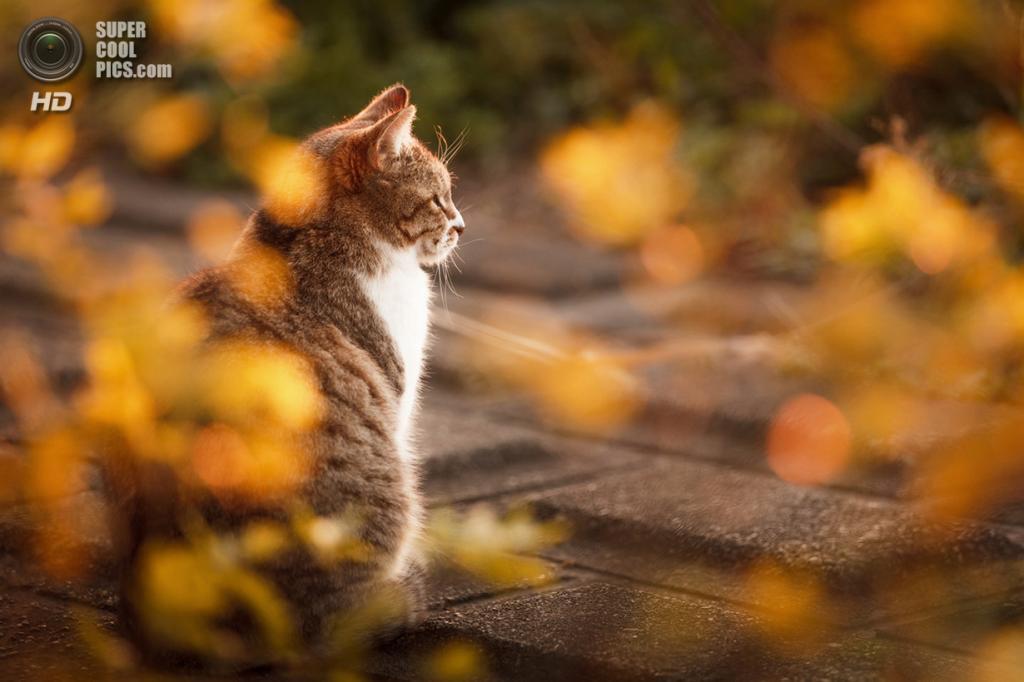 Ранняя осень. (Seiji Mamiya)