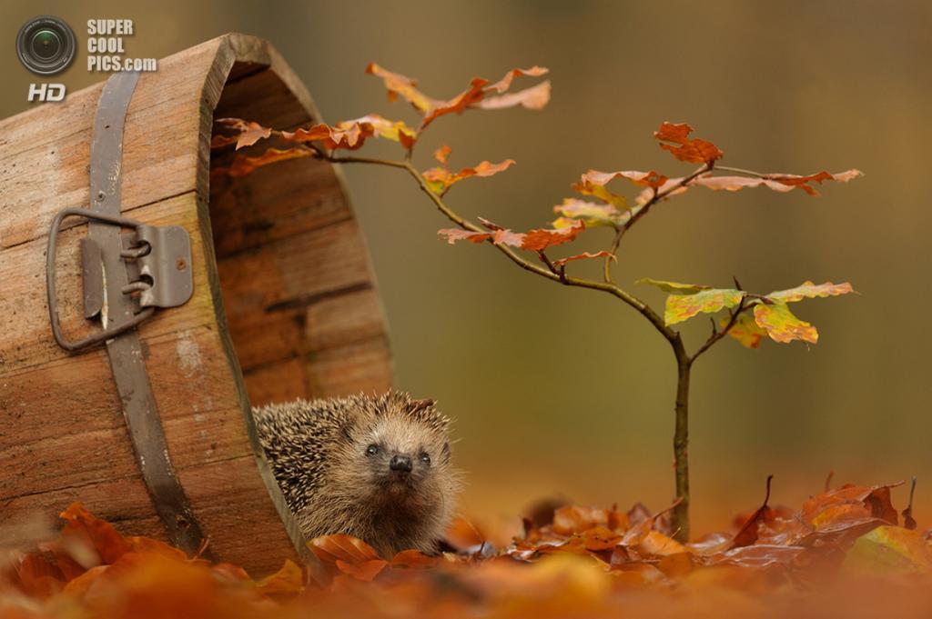 Ранняя осень. (Edwin Kats)