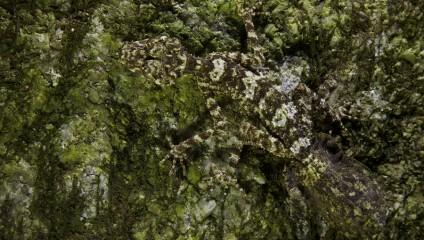 В Австралии обнаружили новые виды земноводных и рептилий (10 фото)