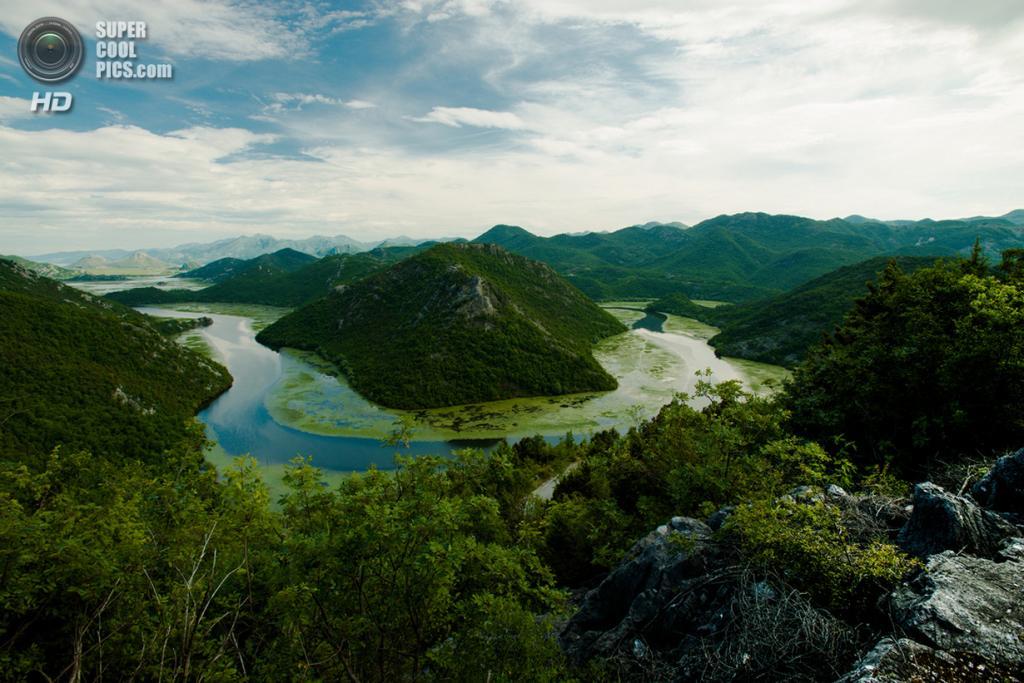 Черногория. Скадарское озеро. (Nikolay Sapronov)