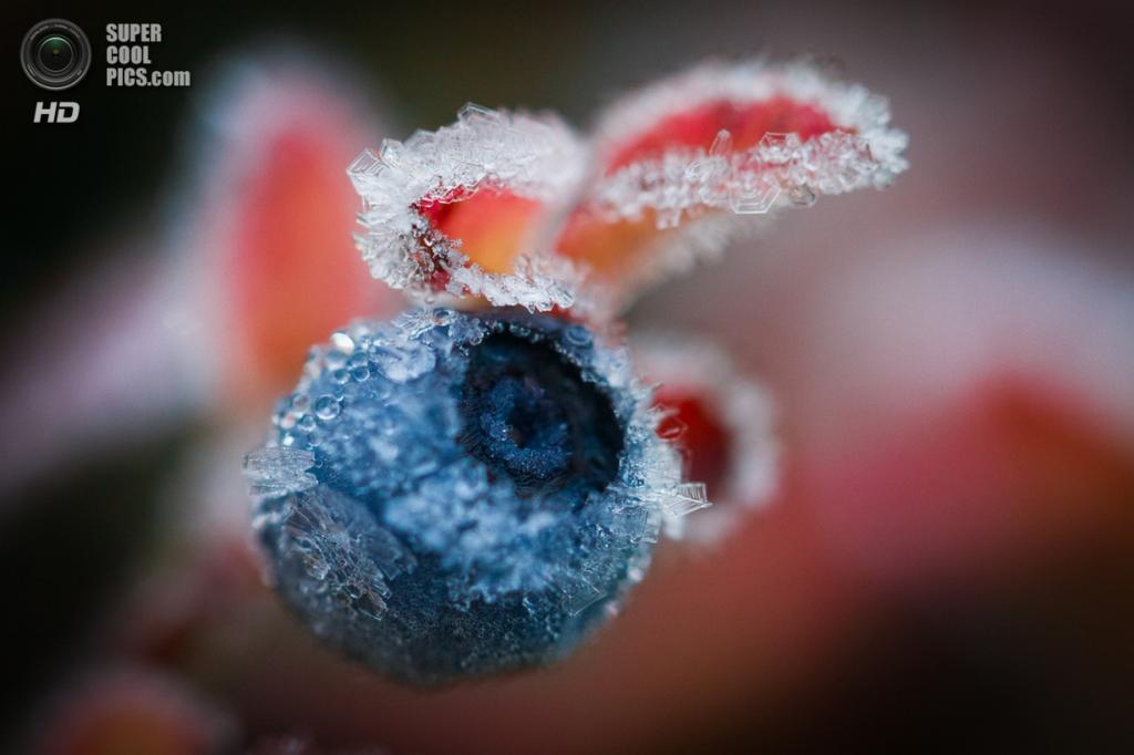 Осенние заморозки. (Konsta Linkola)