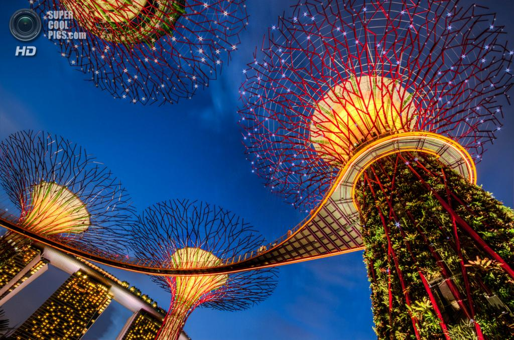 Сингапур. Парковый комплекс Gardens by the Bay. (Jurvis Tan)