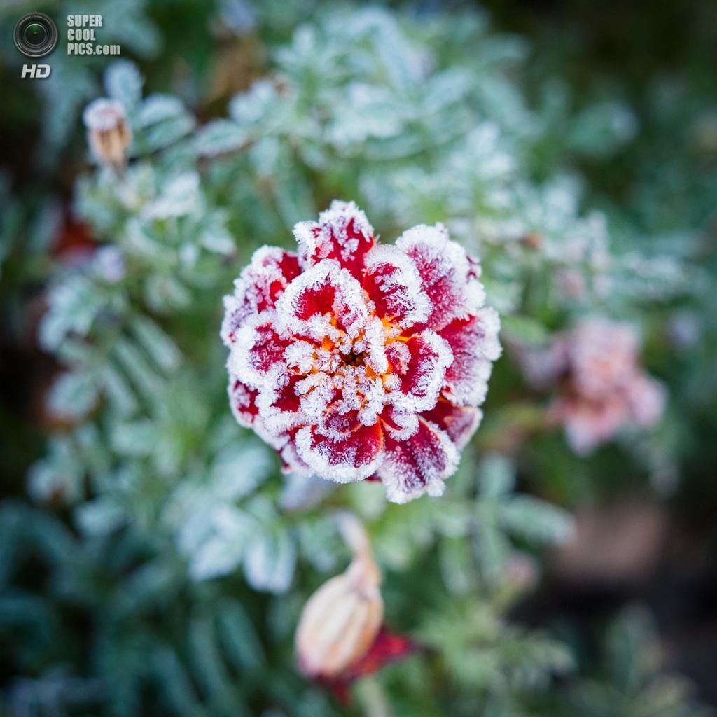 Осенние заморозки. (Mat McDermott)