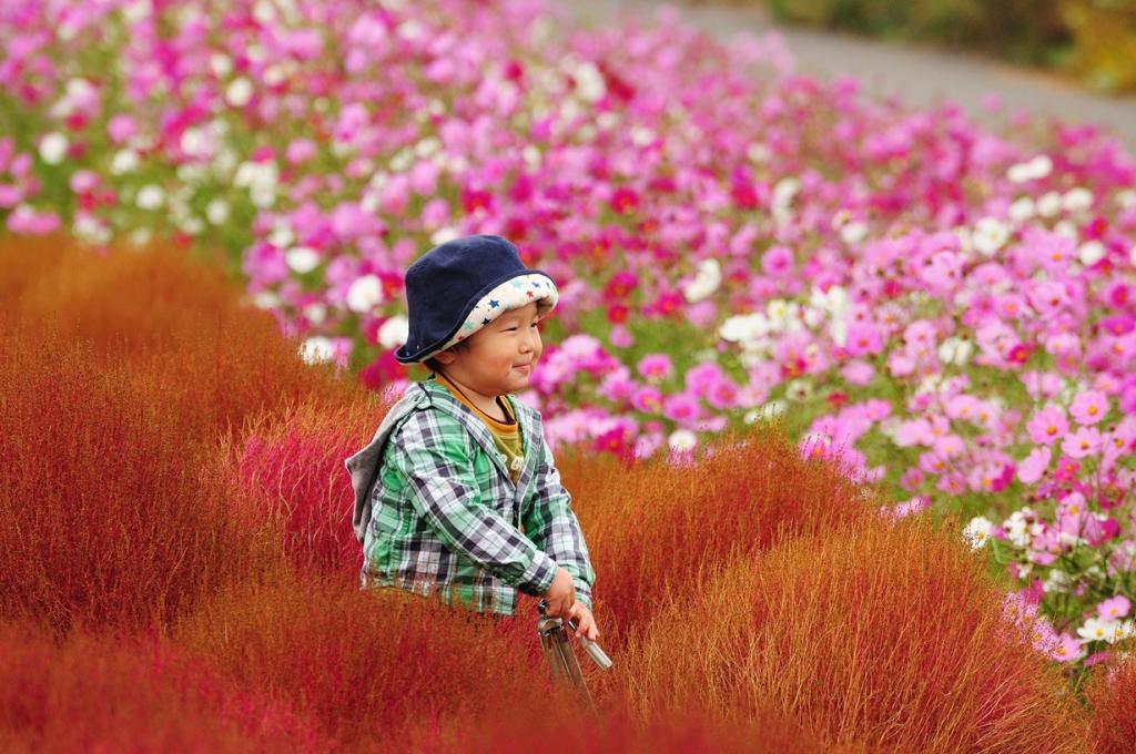Яркая палитра парка Хитачи-Сисайд (20 фото)