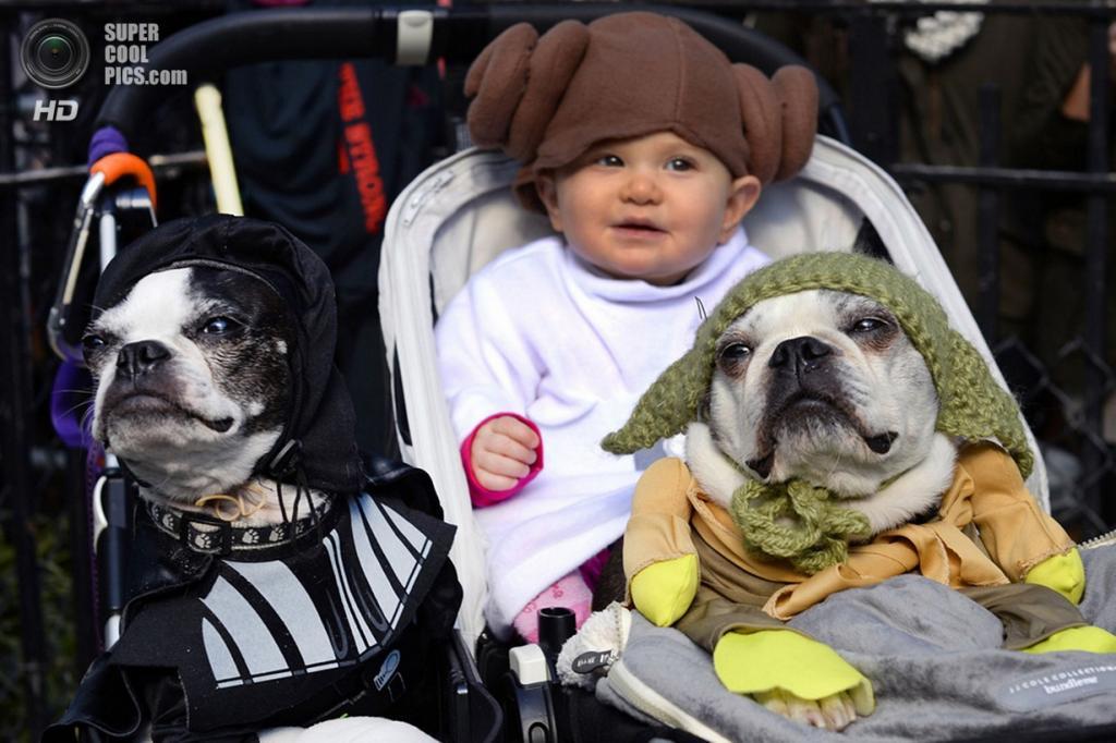 США. Нью-Йорк. 26 октября. Во время хэллоуинского парада собак на Томпкинс-сквер. (Timothy Clary/Getty Images)