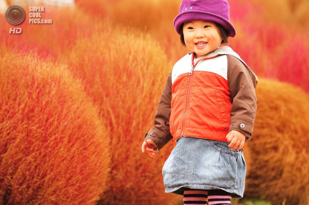 Япония. Хитатинака, Ибараки. Парк Хитачи-Сисайд. Осень. Ребенок среди кустов кохии. (ajari)
